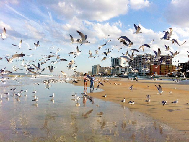 Seagulls in Daytona